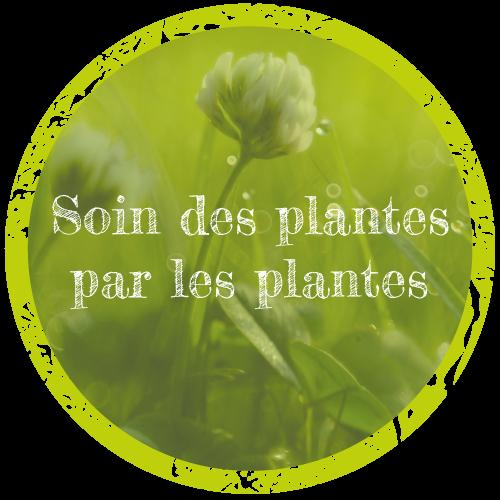 soin des plantes par les plantes